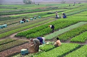 اراضی-کشاورزی